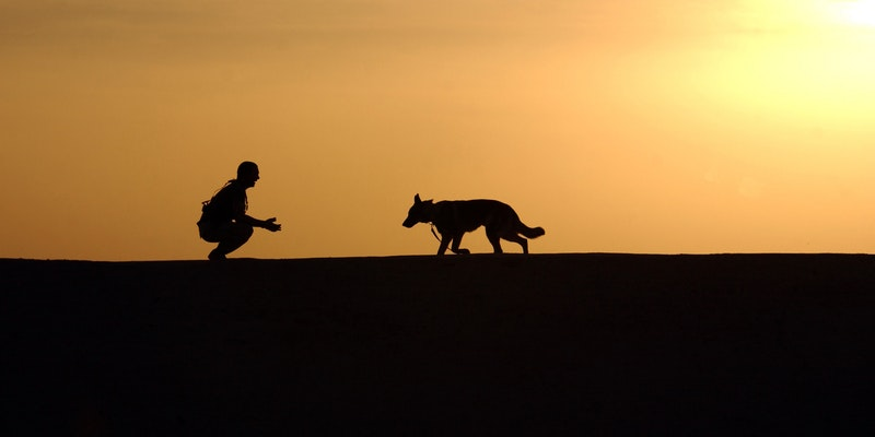Man And Dog In Desert Setting Sunset