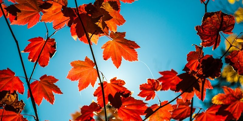 Autumn leaves symbolising life. and future for Lasting Powers of Attorney.