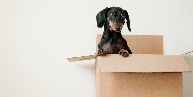 Moving home. A dog in a box.
