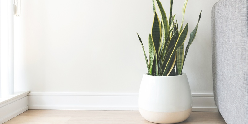 House plant signifying home