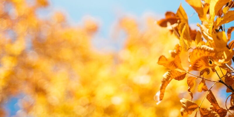 Autumn leaves to signify understanding probate