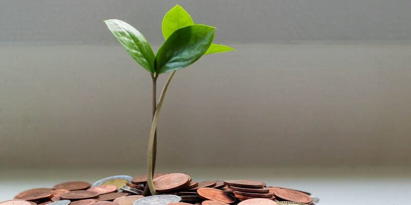 Coins and sapling denoting pension entitlement for eligible workers